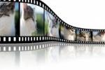 I Certame de micro vídeos – Fallo do xurado