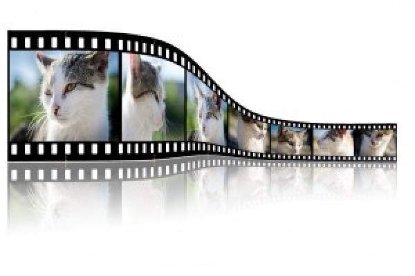 5º Certame de micro vídeos – Fallo do xurado