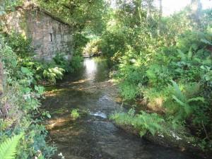 Rio Sarela, perto do seu nacemento